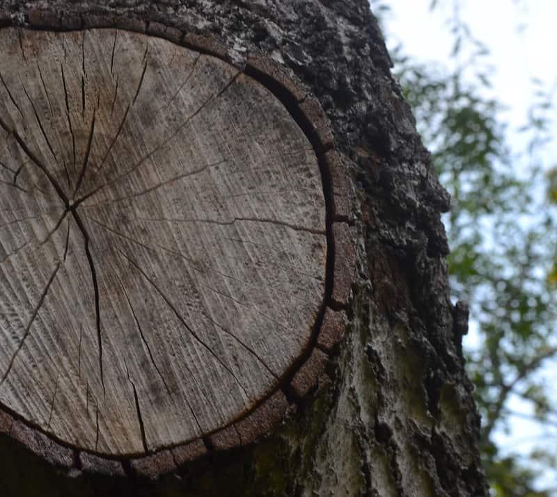 tree trunk dartboard